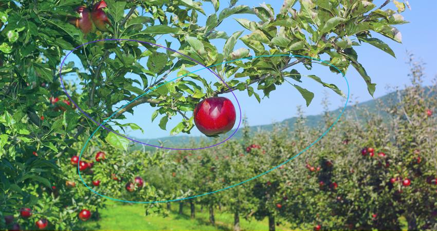 Los productores de fruta en Colorado usan la solución IoT habilitada con @Sigfox para rastrear el clima