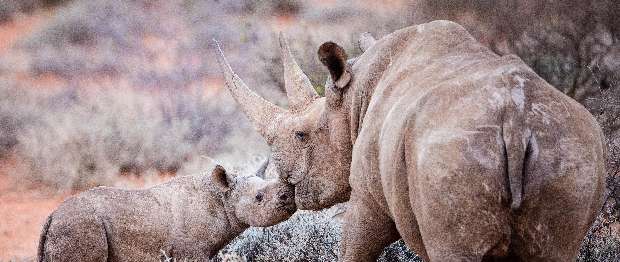 """@Sigfox: En Zimbabue lanzan un """"GoogleMap de rinocerontes"""" para combatir la caza furtiva"""