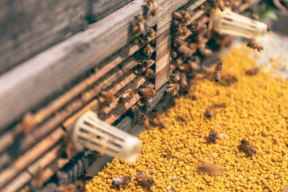 BEEHIVE 4.0 / Inteligencia artificial al servicio de las abejas @Sigfox