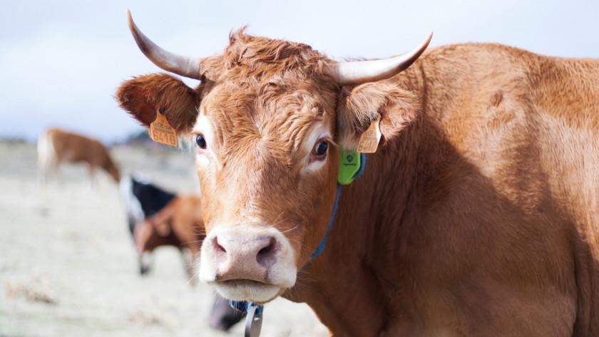 Digitanimal, pionero de agritech inteligente, ayuda a los ganaderos a gestionar mejor su ganado y garantizar el bienestar de los animales