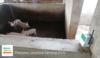 Detección precoz de enfermedades respiratorias en cerdos con Edge Impulse